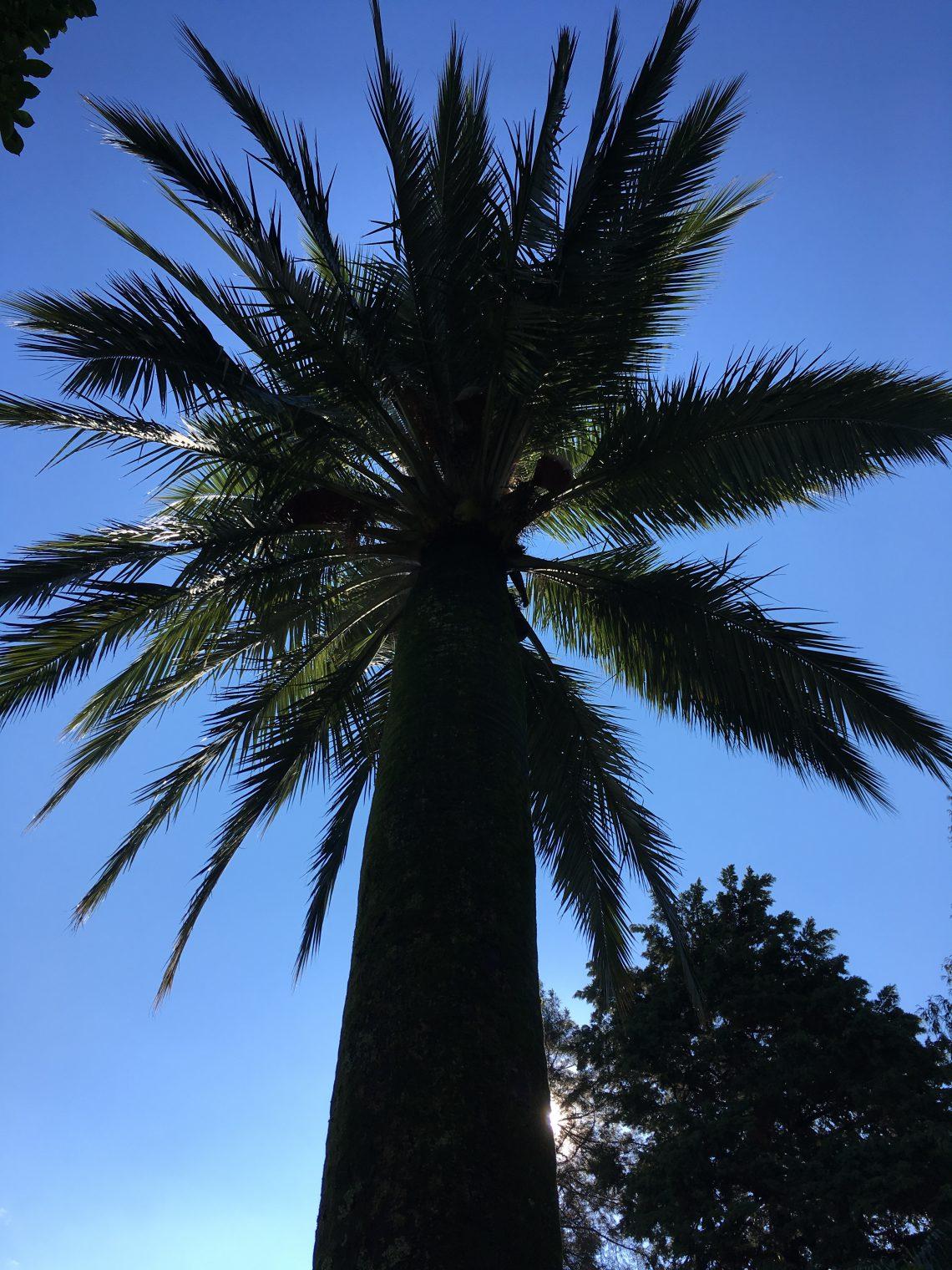 Palma sulle isole di Brissago