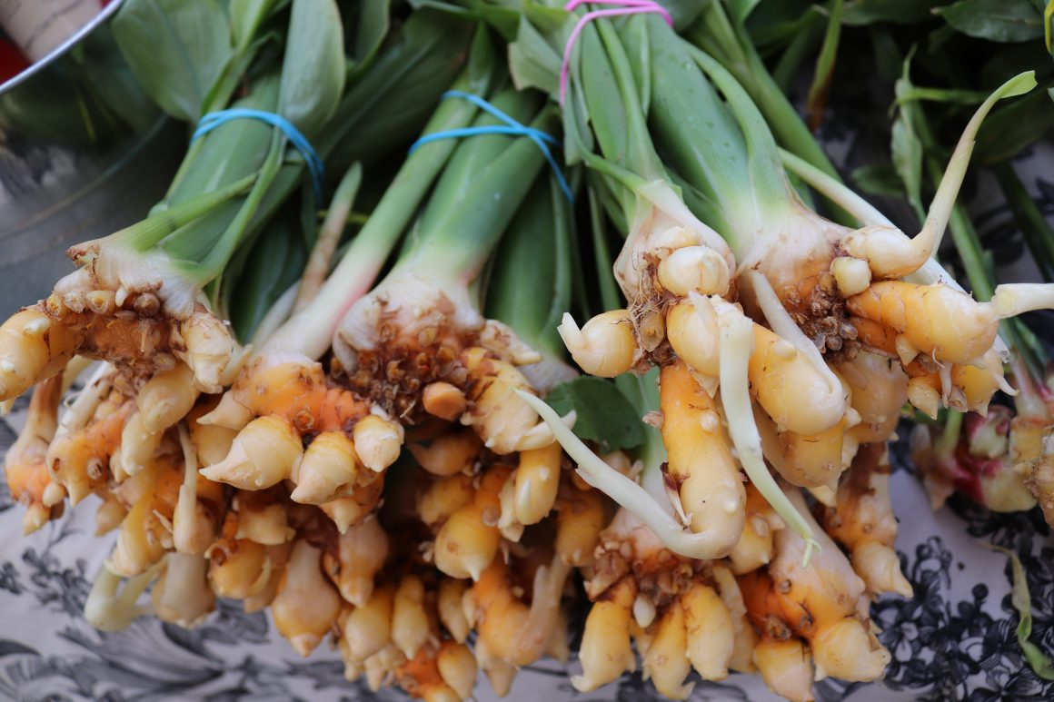 Curcuma con rizoma
